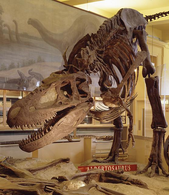 Dinosaur Bones, National Museum of Natural History